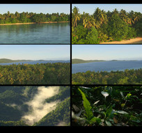 航拍森林视频