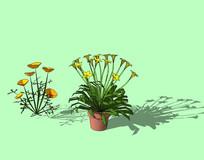 开黄花盆栽植物SU