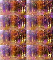 金色秋天树林背景视频