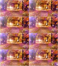 金色秋天树林树叶背景视频