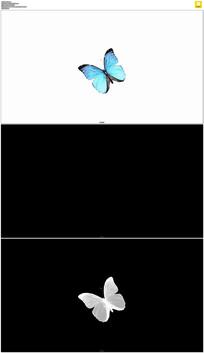 蓝色蝴蝶飞舞视频