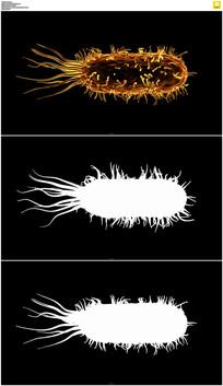 三维细菌动画动态视频素材 mov