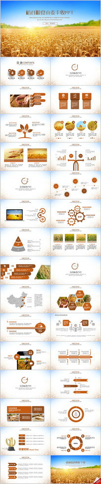 金色丰收农业农产品水稻产品介绍PPT模板