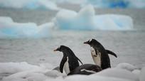 南极企鹅视频 mp4