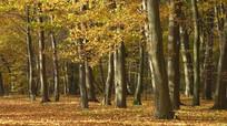 秋天森林视频