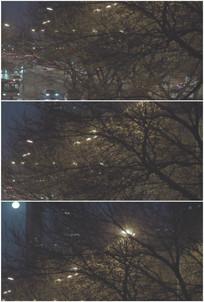 傍晚城市路灯大树街景月亮视频