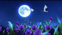 月夜仙鹤鲜花视频素材