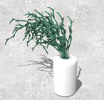 草本观赏植物SU
