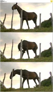 一匹骏马实拍视频素材