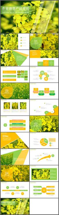 农业油菜花介绍PPT模板