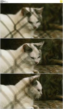 笼子里的小猫咪实拍视频素材