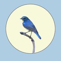 蓝色小鸟无框画 PSD