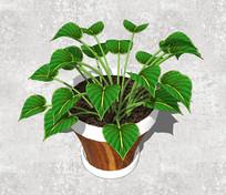 室内绿色盆栽SU