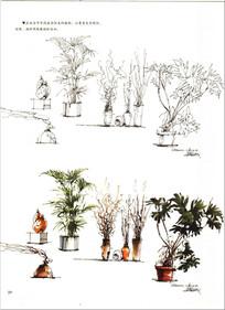 植物手绘 JPG