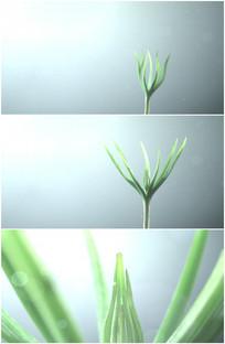 春天小草植物生根发芽特写视频