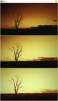 日出树剪影视频素材