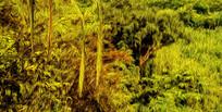 欧美金色森林背景无框画