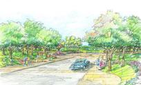 道路周边植物配置手绘效果图
