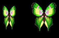 飞翔的花蝴蝶动态视频素材