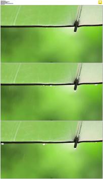 绿色雨伞上的雨滴实拍视频素材