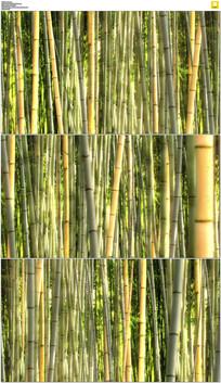 茂密竹林实拍视频素材