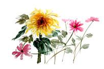 国画向日葵设计用素材