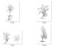 盆栽植物钢笔手绘