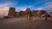一带一路沙漠骆驼实拍视频素材