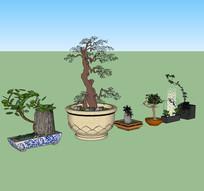 中式盆景植物 skp