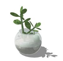 玻璃缸里的仙人掌盆栽