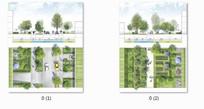道路绿化设计平立面图 JPG