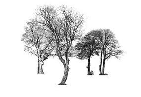 冬景树su模型
