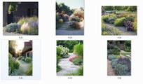观赏草植物配置意向图