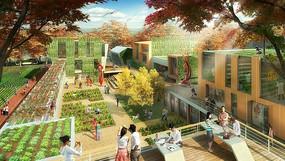 社区可食地景效果图