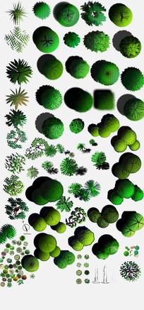 植物平面psd素材