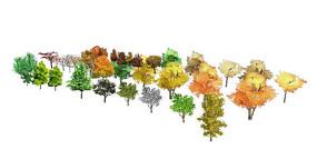 各种乔灌木su模型集合 skp