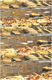 秋天枫叶溪水河流浅滩实拍视频