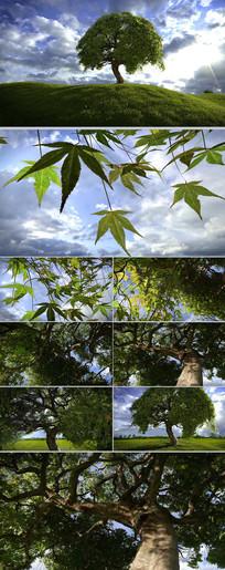 大树枝繁叶茂生机勃勃CG动画