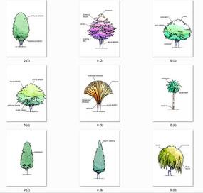 国外清新风格手绘植物立面