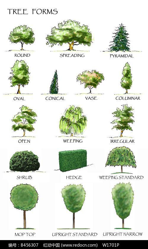 国外手绘植物立面图图片