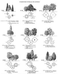 植物配置手绘 JPG