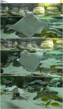 水族馆鱼儿跳舞实拍视频素材