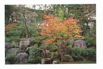 日式庭院后花园 JPG
