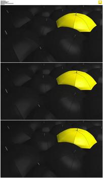 黑伞中间一把黄伞实拍视频素材