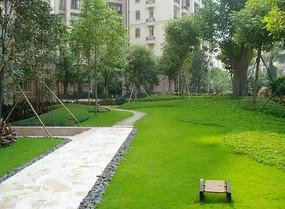 小区园路植物景观