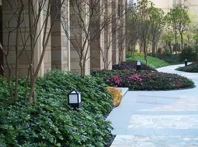 小区园路植物设计