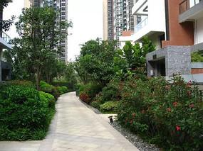 小区园路植物种植设计