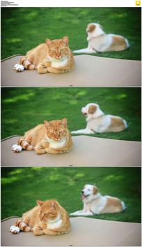 悠闲的小猫和小狗实拍视频素材