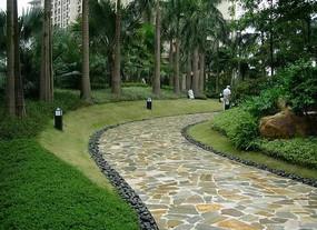 园路景观植物配置