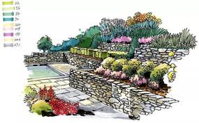 花灌木植物配置手绘效果